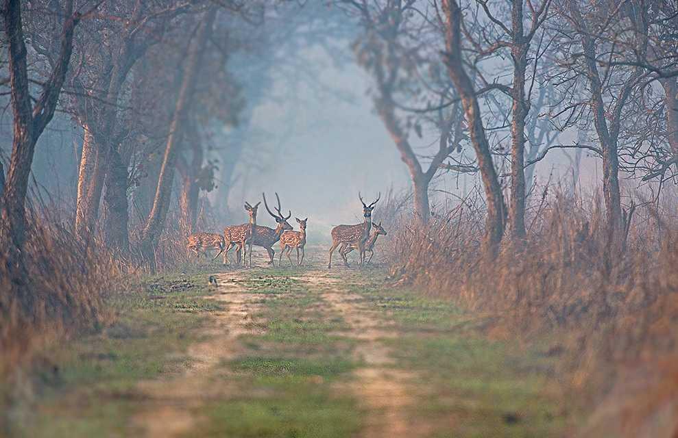 Summer Season, Dudhwa National Park