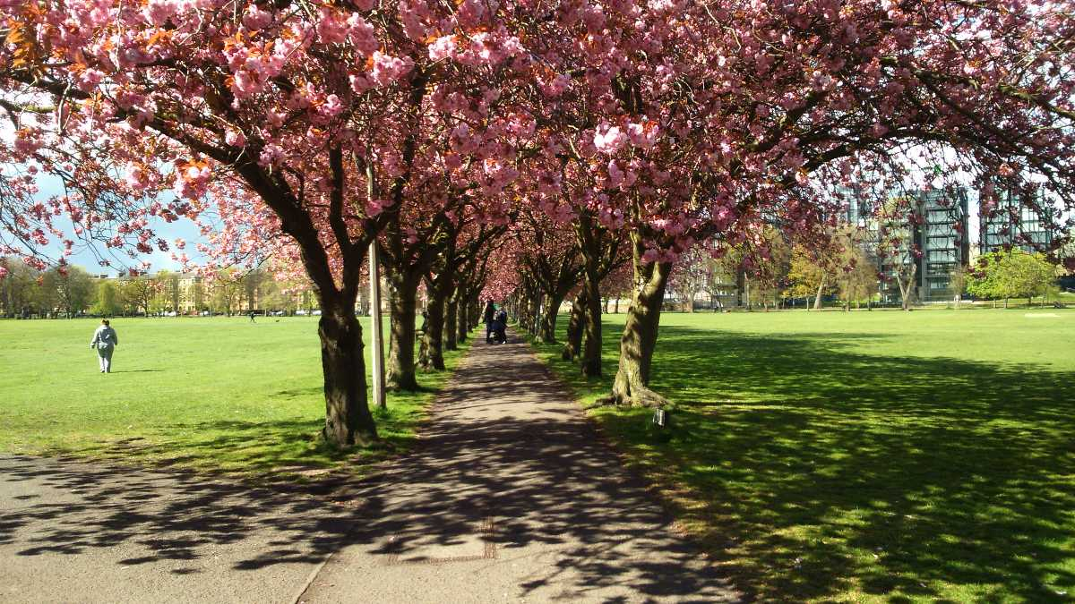 Edinburgh, Best Places In The World To See The Spring Blossoms In Its Peak!