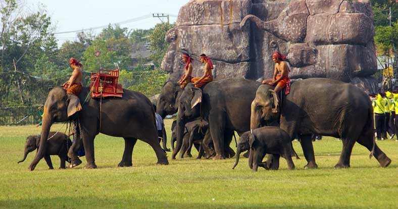 Elephant round up, thailand