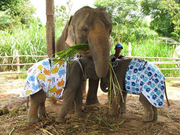 Adopt an elephant in thailand