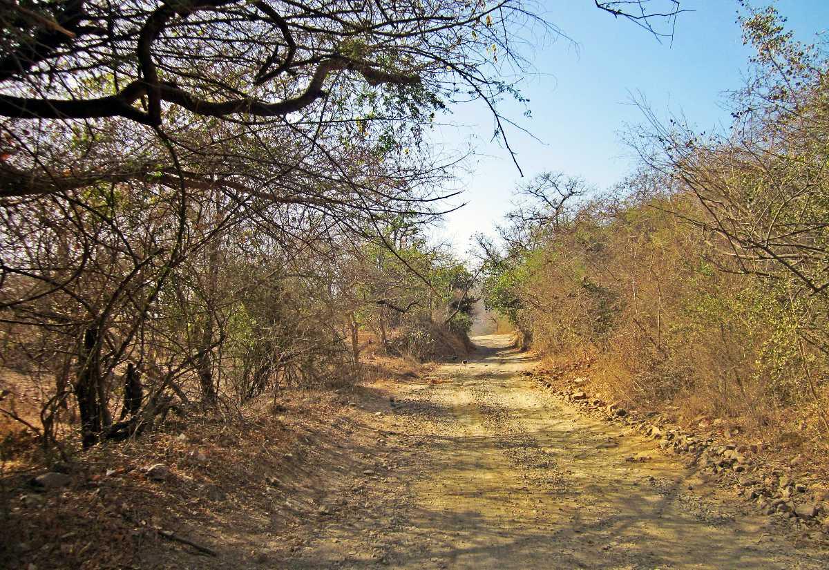 Gir National Park, Gujarat