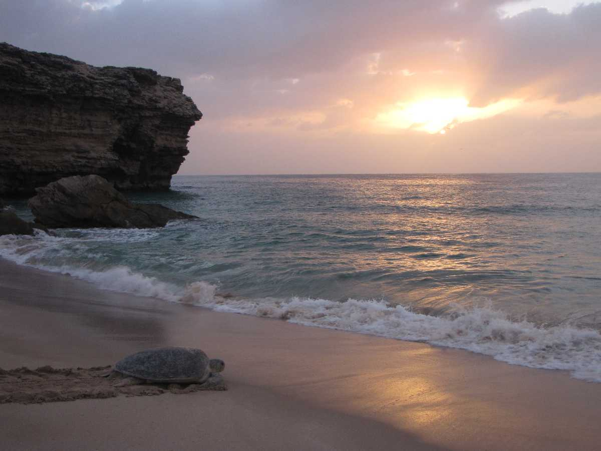 Turtle Watching in Oman