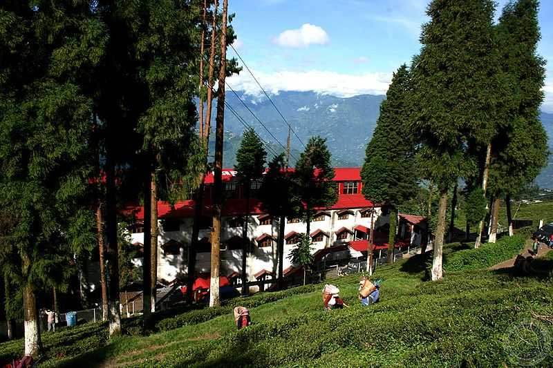 Mountain Resort, Darjeeling