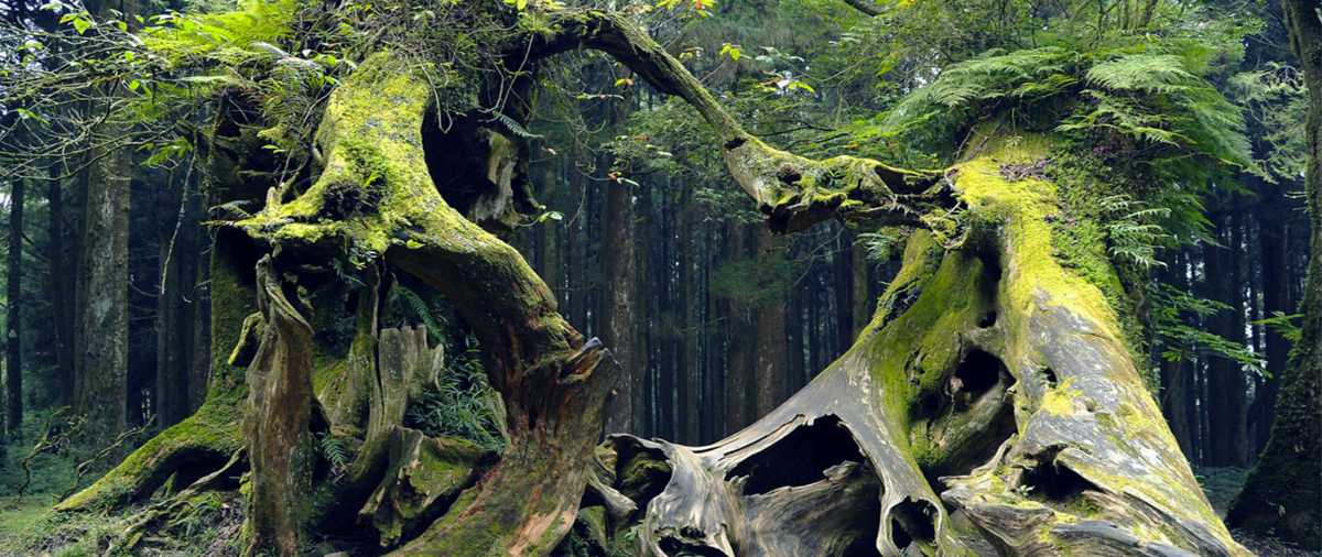 Hoia Baciu Forest, most Haunted places in the world