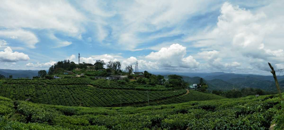 Kannan Devan Tea Plantation