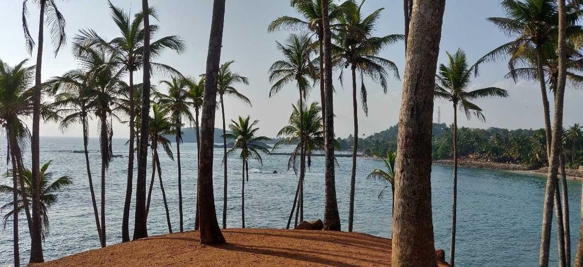 Palm Tree Grove Mirissa