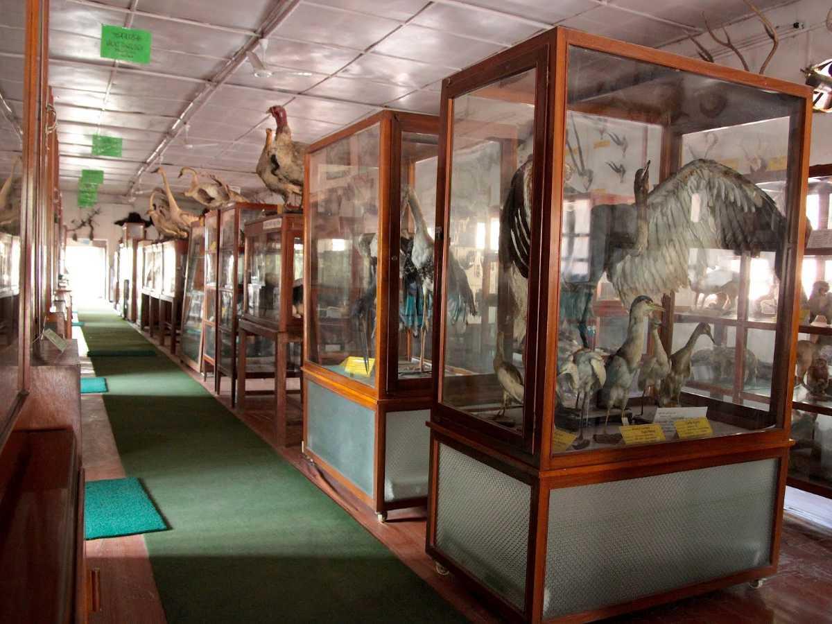 Natural History Museum of Nepal, Museums in Kathmandu