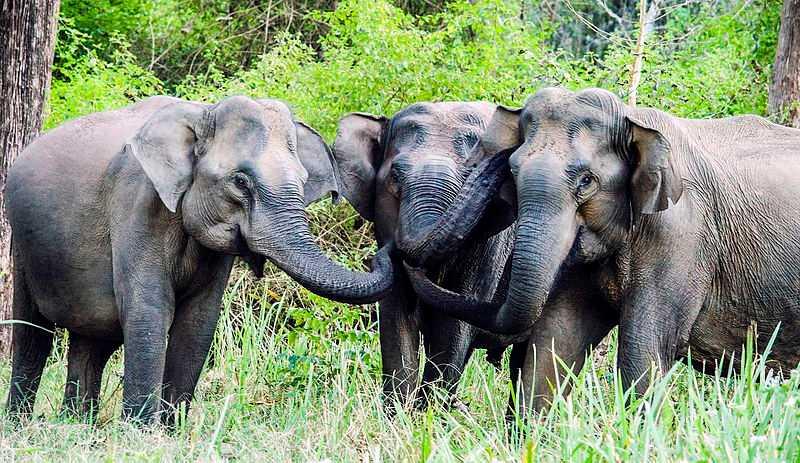 Elephants Sanctuaries in India