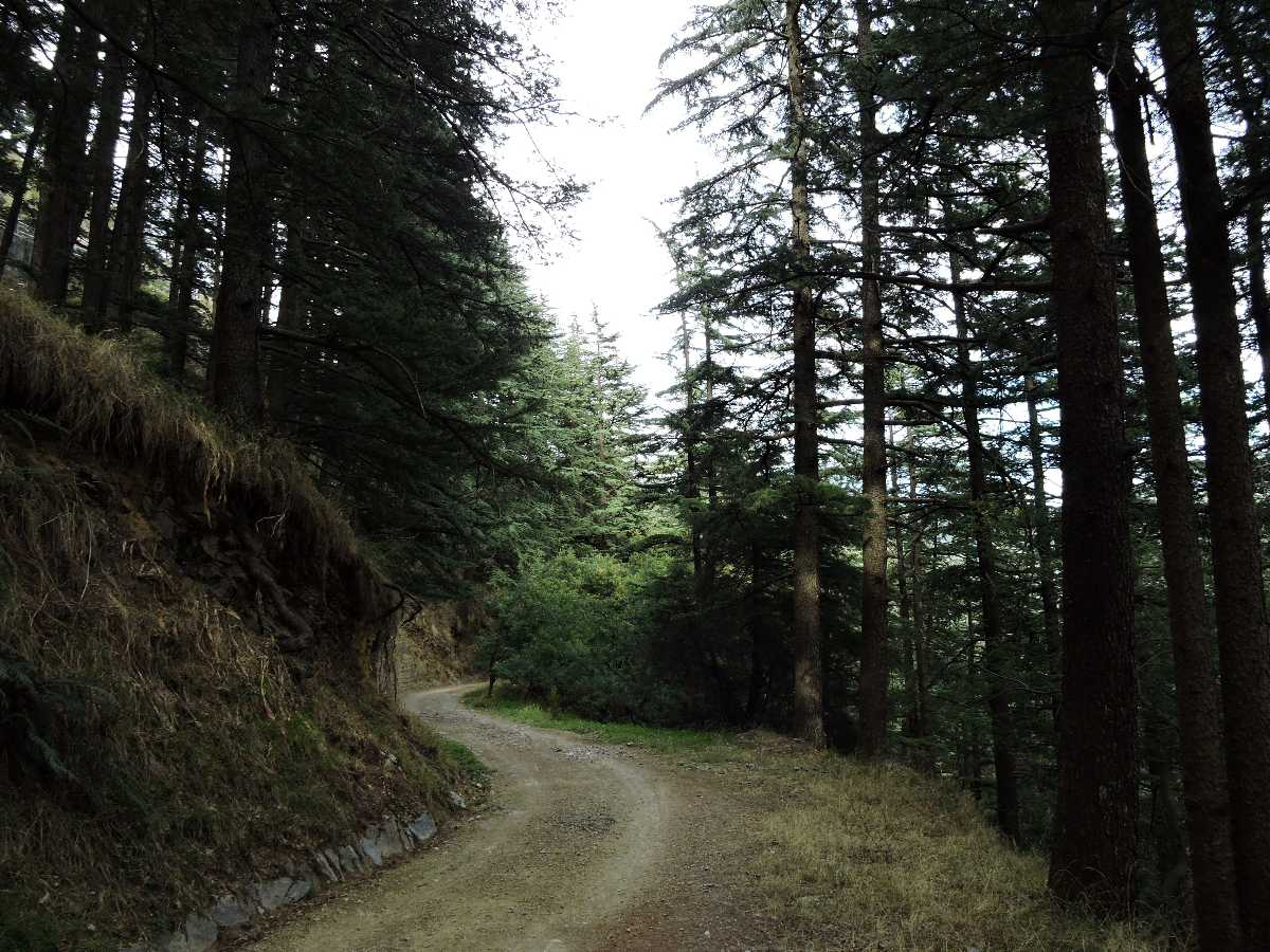 Inner view of Shimla water catchment wildlife Sanctuary