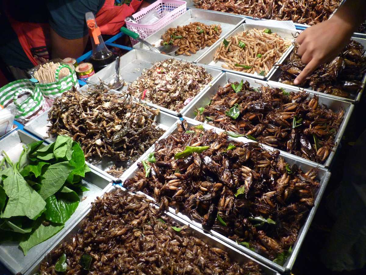 A stall selling fried bugs at the Night Bazaar, Chiang Rai