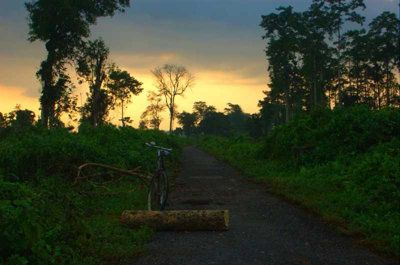 Jungle trail at Nameri Eco camp