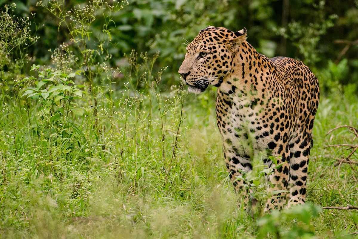 Jambughoda Wild Sanctuary, Picnic spots near Vadodara