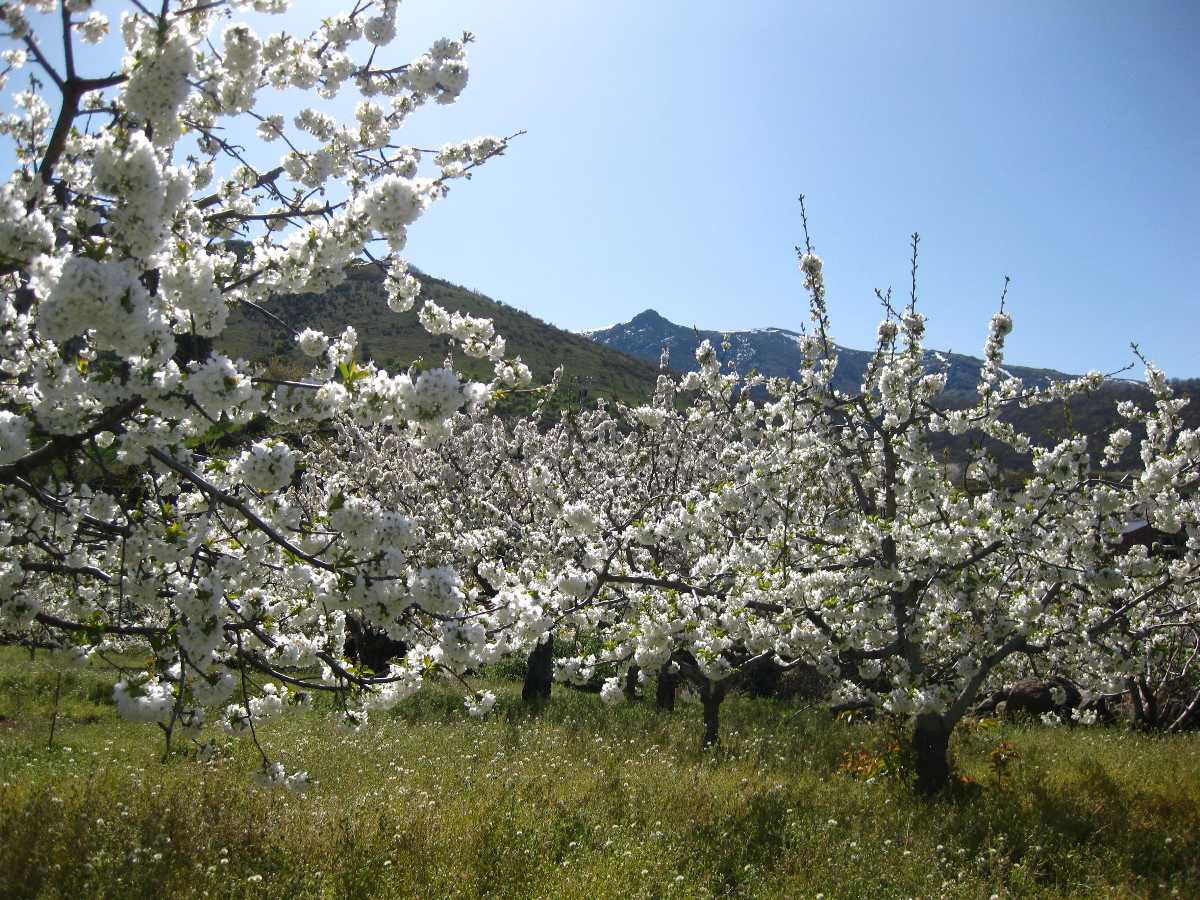 Jerte Valley, Best Places In The World To See The Spring Blossoms In Its Peak!