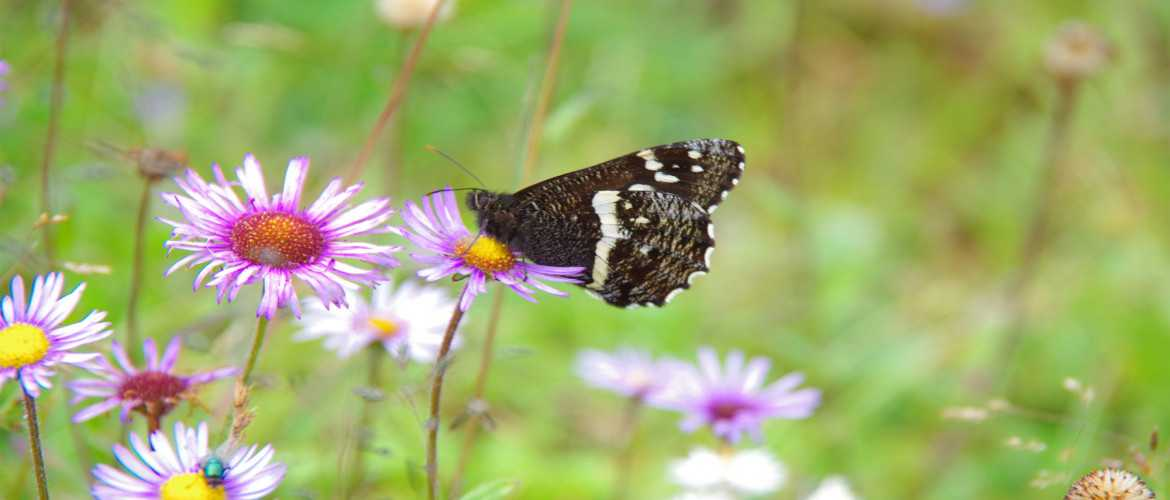 Butterfly at Jigme Singye Wangchuk National Park Bhutan