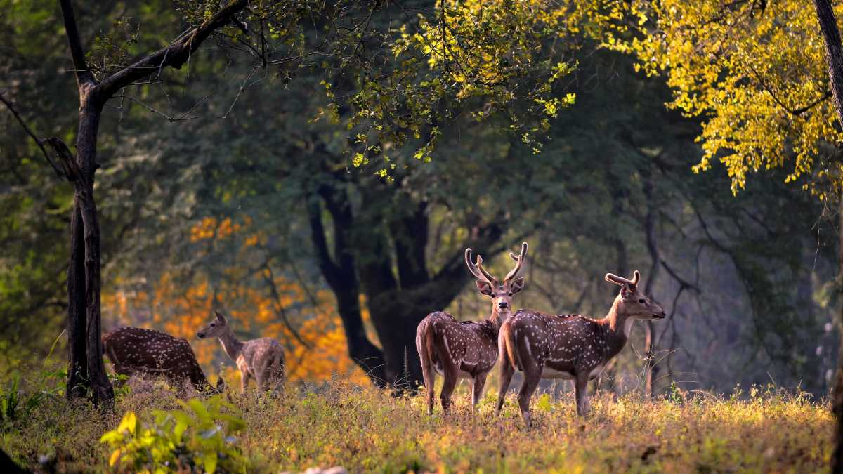 Welcome 2019 In The Wild At Kanha