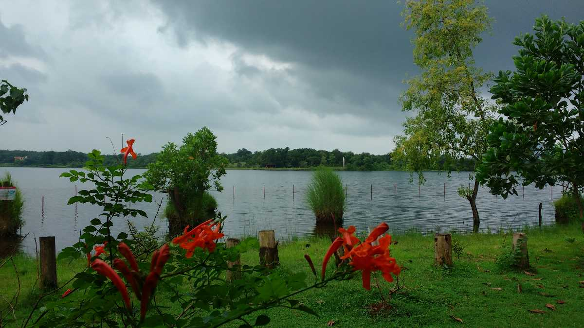 Monsoon Season, Kolad