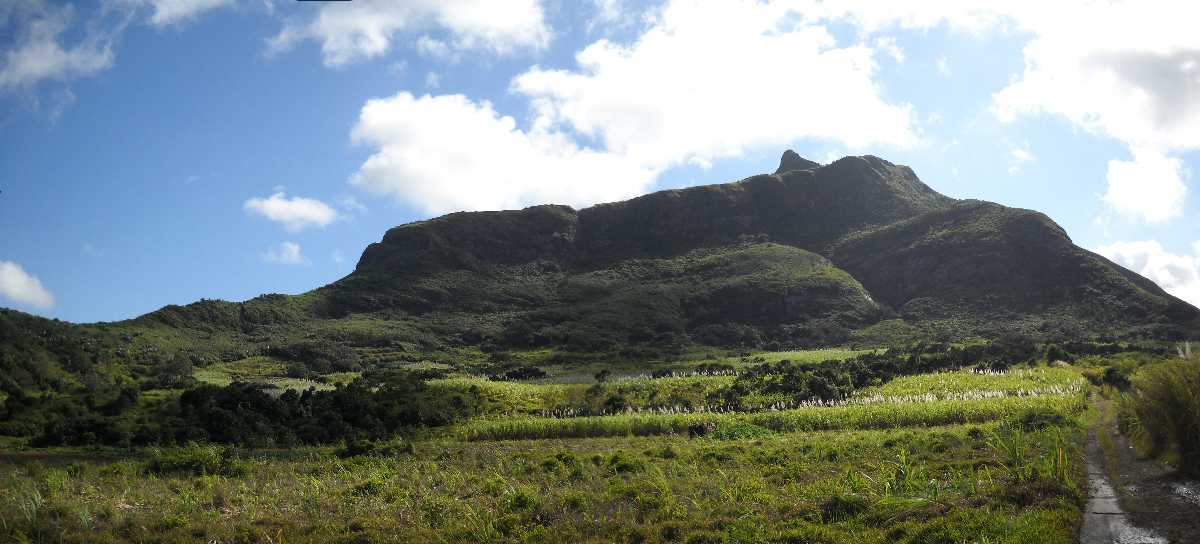 Le Pounce Nature Reserve, Wildlife in Mauritius