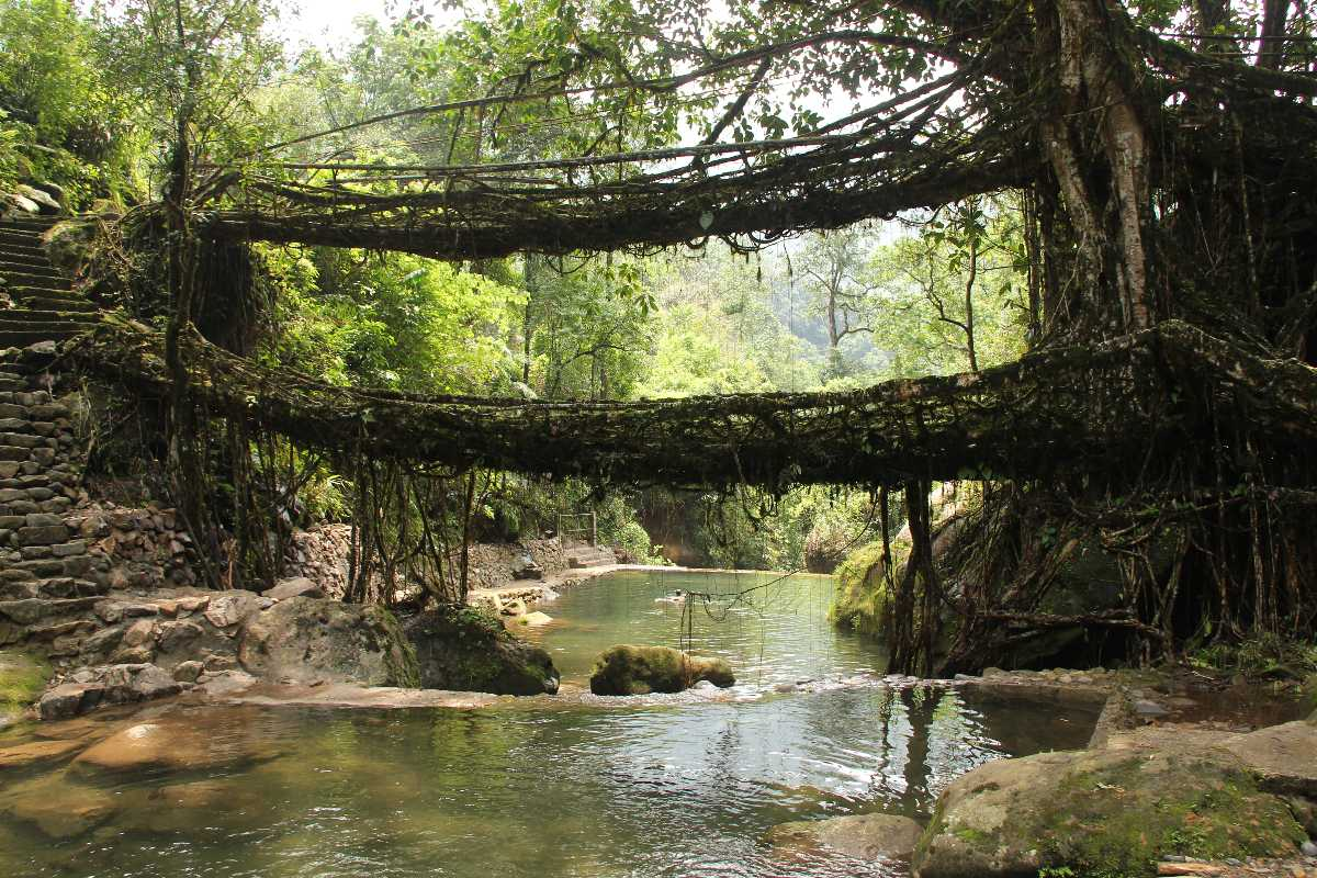 Living Roots Bridge