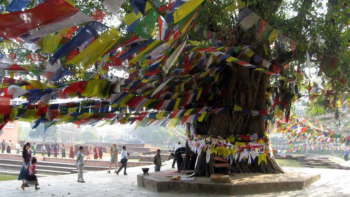 The iconic tree which is related to Buddha.