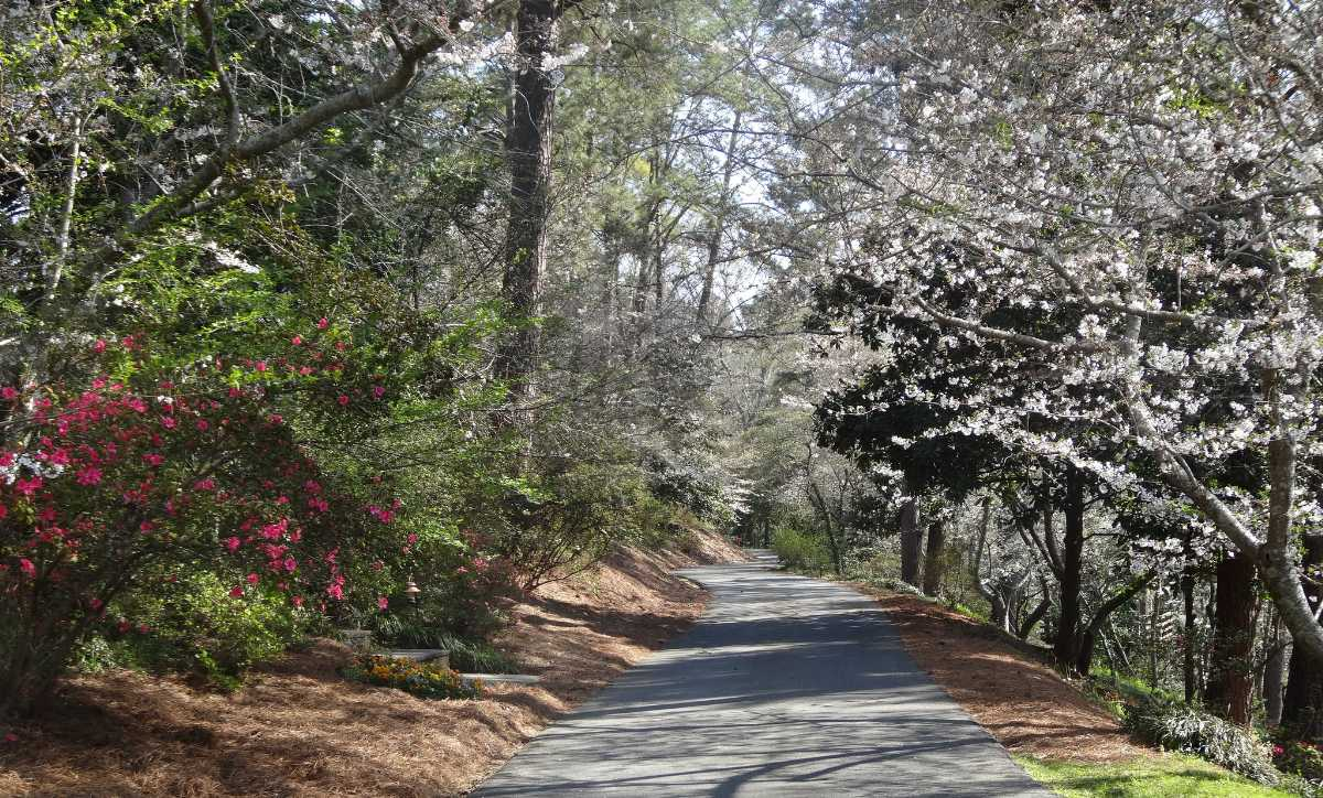 Macon, Best Places In The World To See The Spring Blossoms In Its Peak!