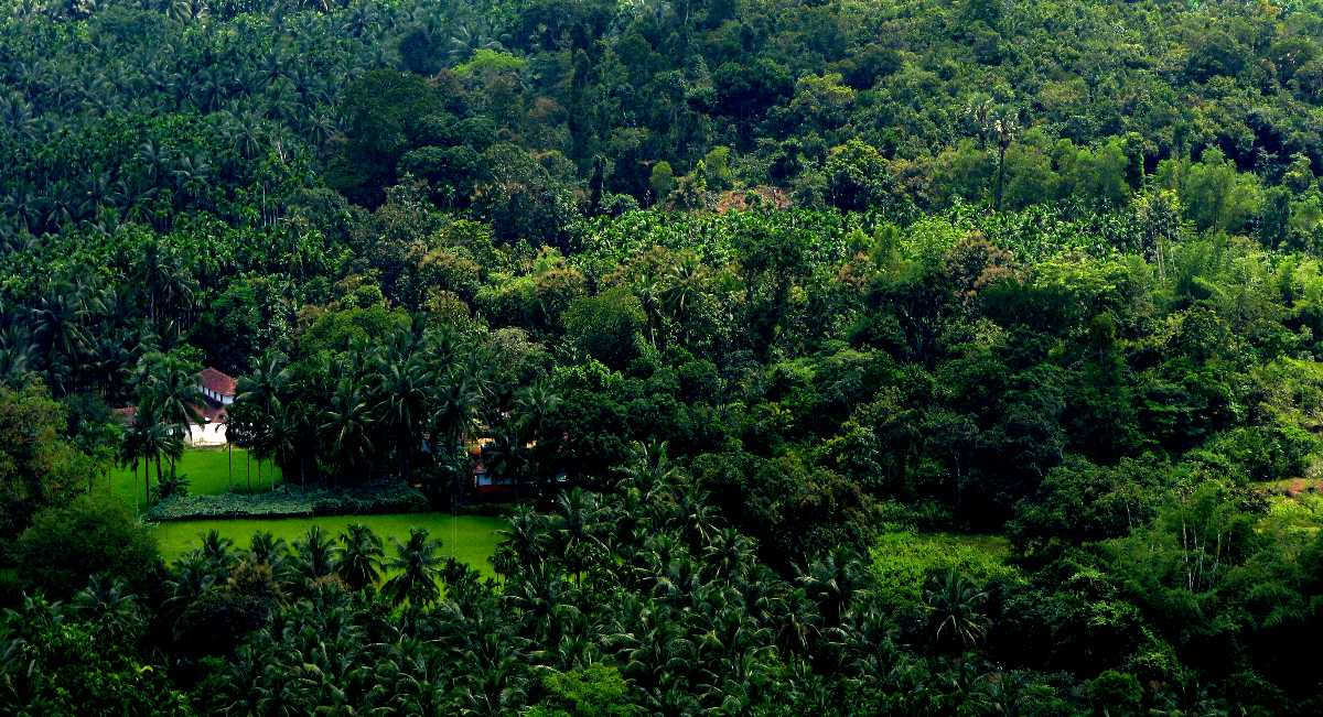 Lush Green Landscape during Monsoons