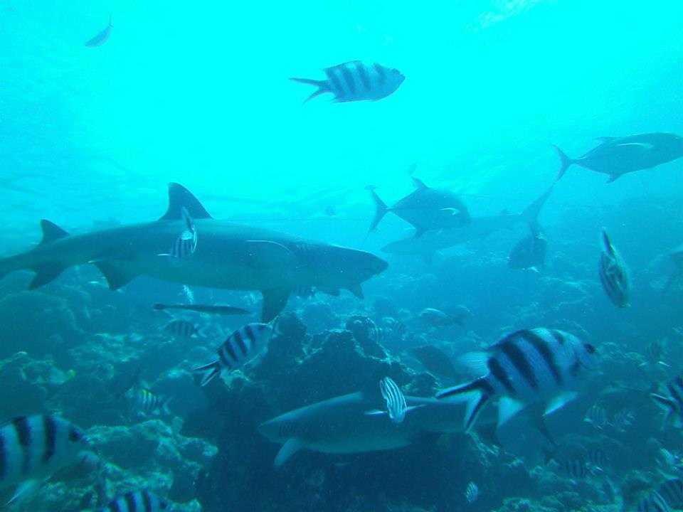 Marine Conservation, Fiji