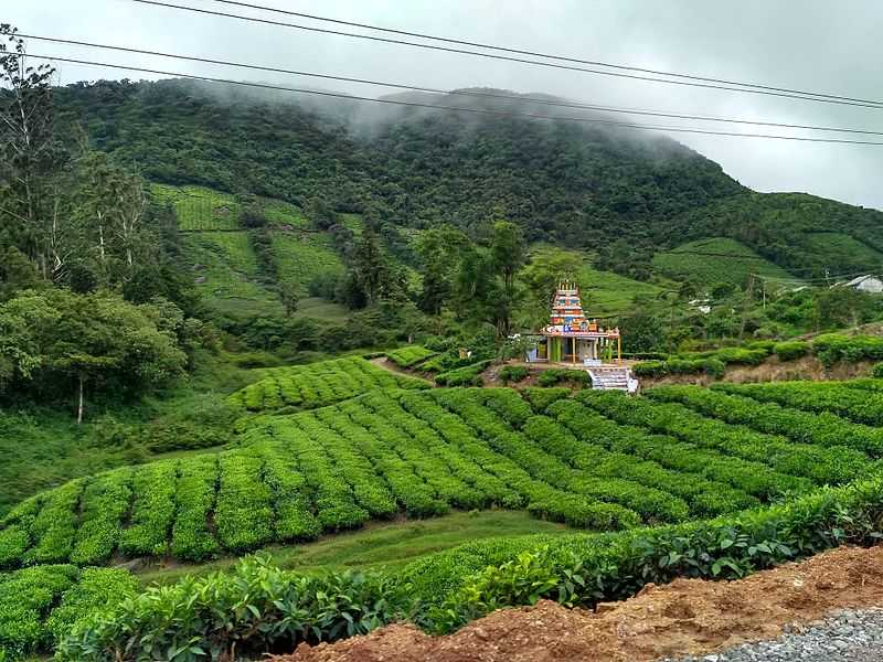 Meghamalai Tea Estates