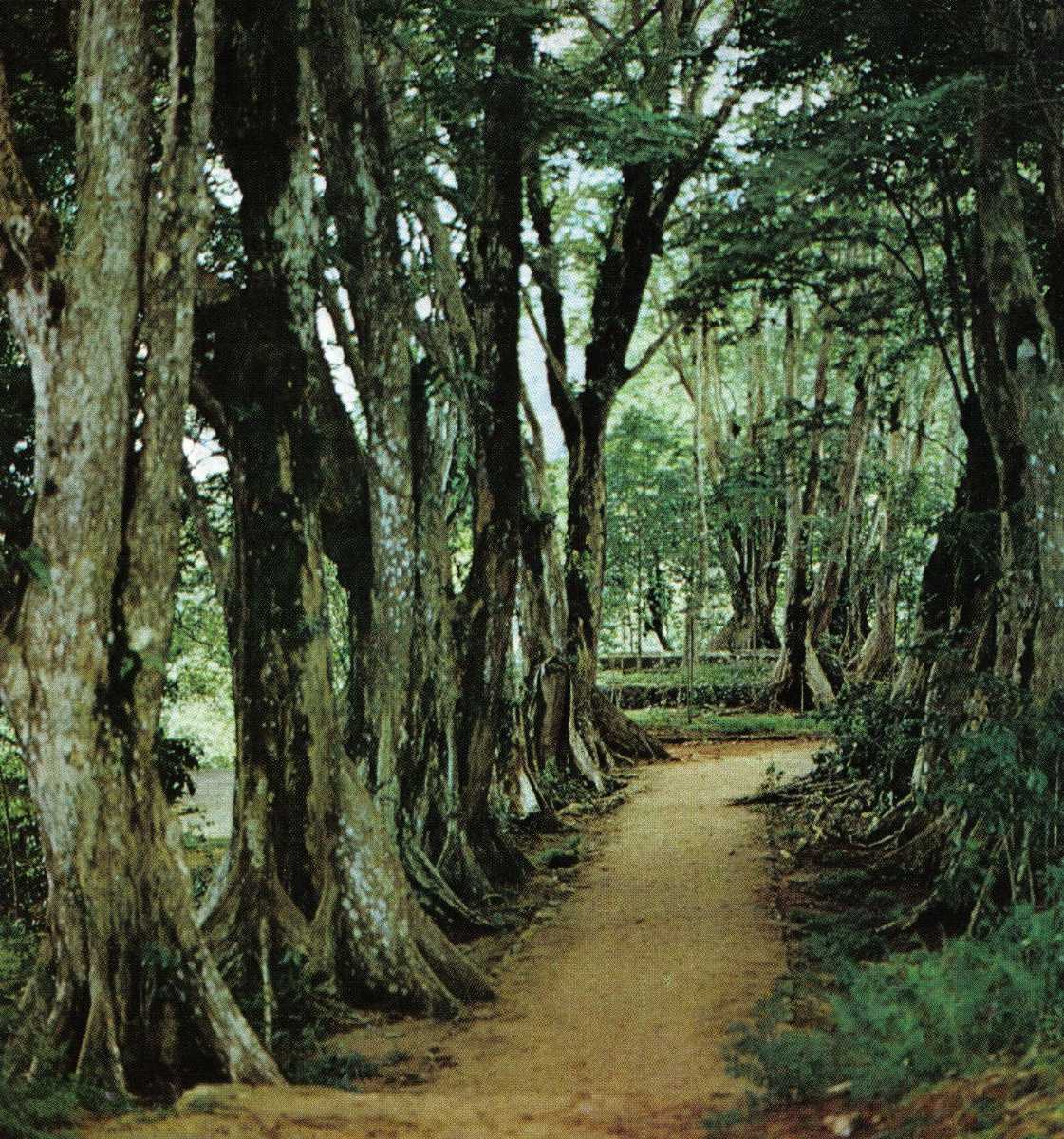 Trail in Morne Seychellois National Park, Seychelles