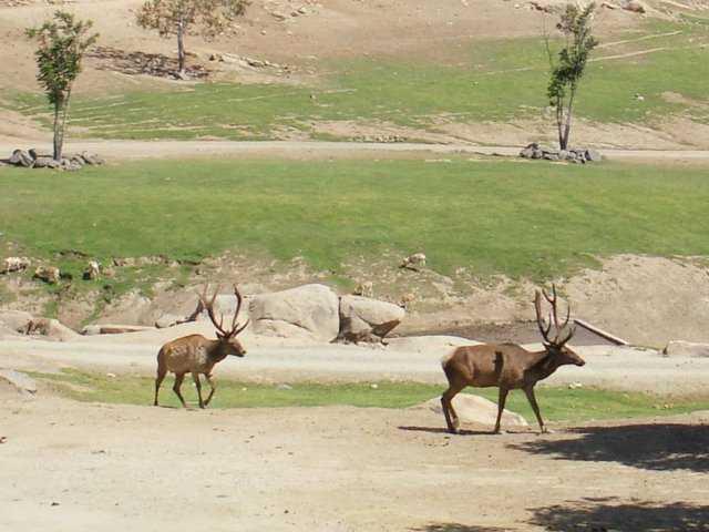 Malsi Deer Park