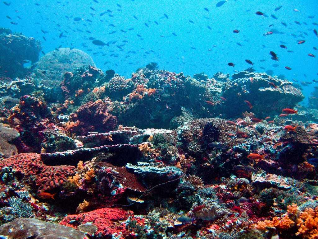 Coral Reefs at Nusa Lembongan