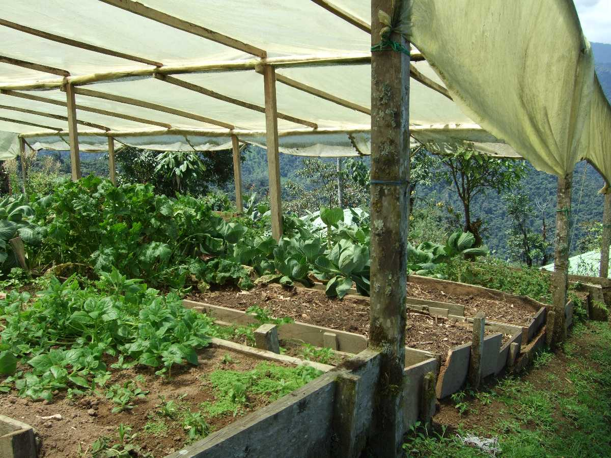 Kintamani Organic Farms