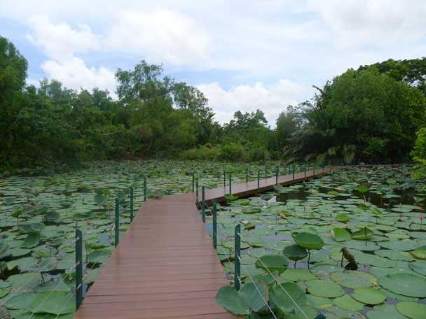 Lily Pond at King Rama IX Park