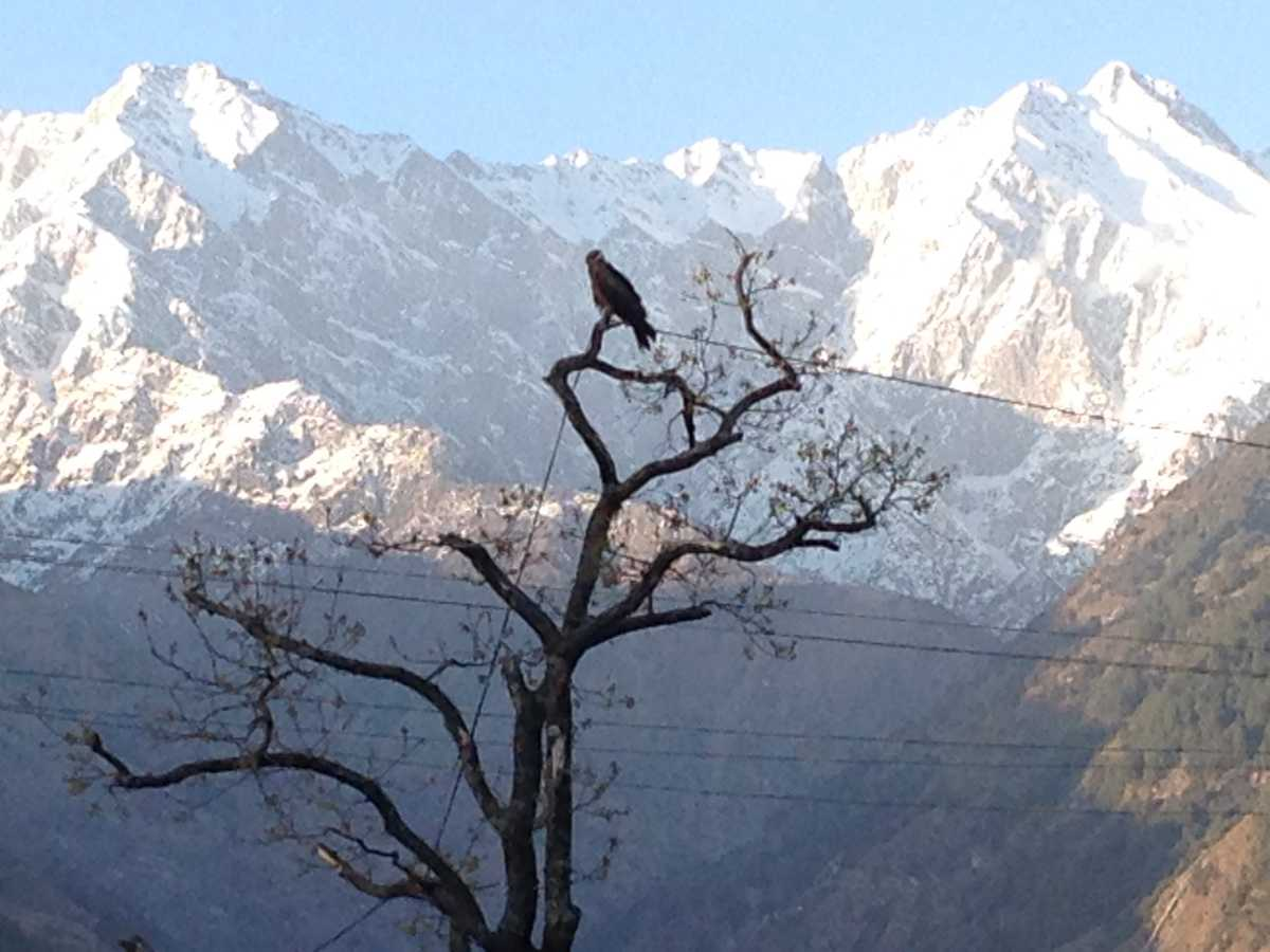 Palampur in Winter