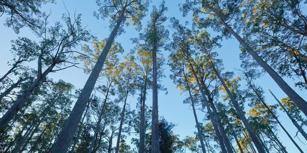 Opt For Carbon Offset Credits