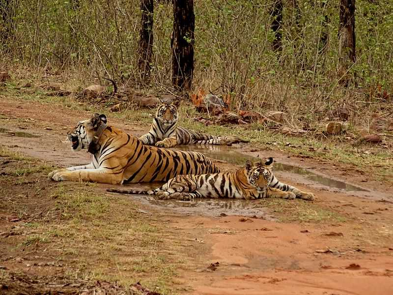 Tiger Reserves in India, Panna Tiger Reserve