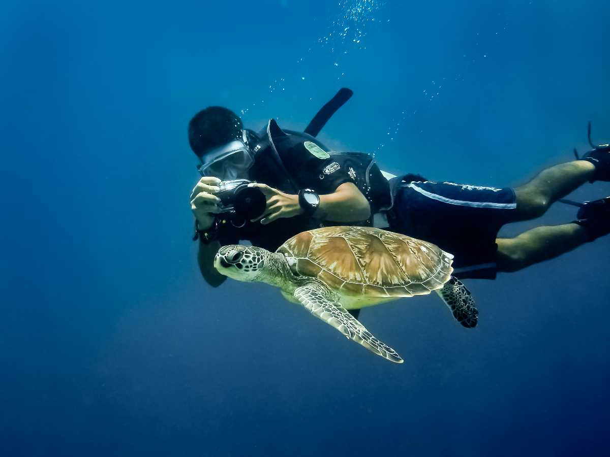 Snorkelling with Turtles in La Digue