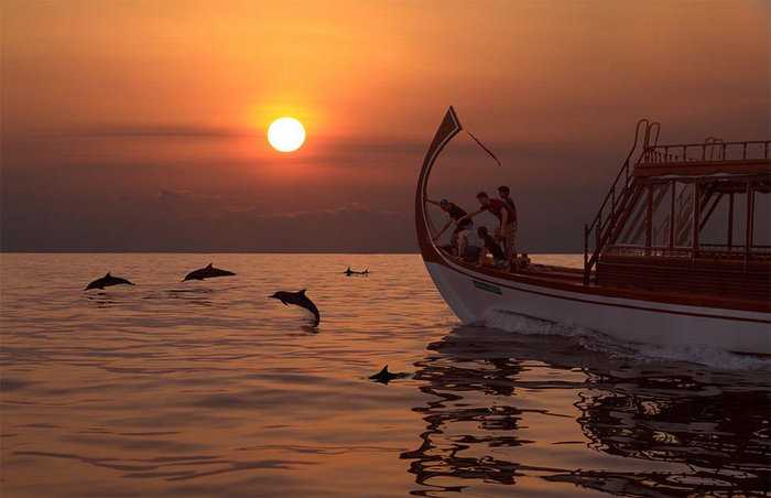 Opt for Sunset Dolphin Cruising in Maldives with Kids