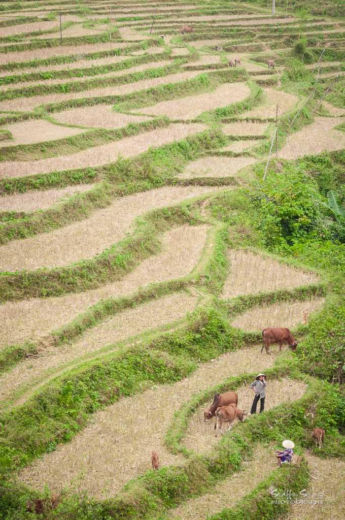 Pu Luong Nature Reserve, Trekking in Vietnam