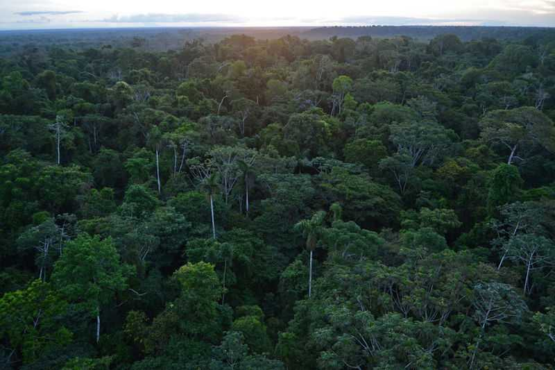 Rainforest Conservation, Peru