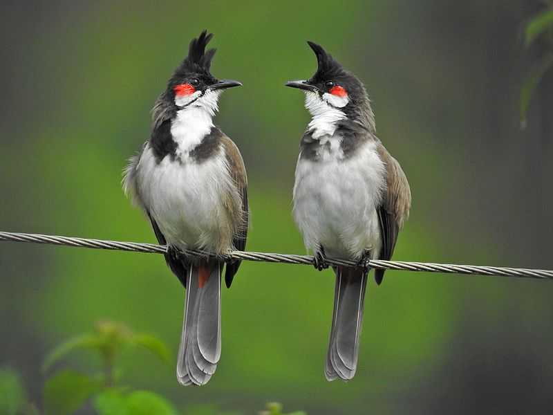 Birdwatching near Valparai