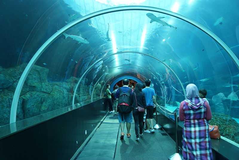 SEA Aquarium, Singapore in November