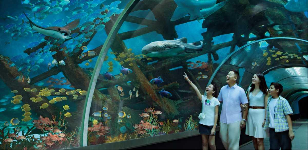SEA Aquarium, Singapore with kids