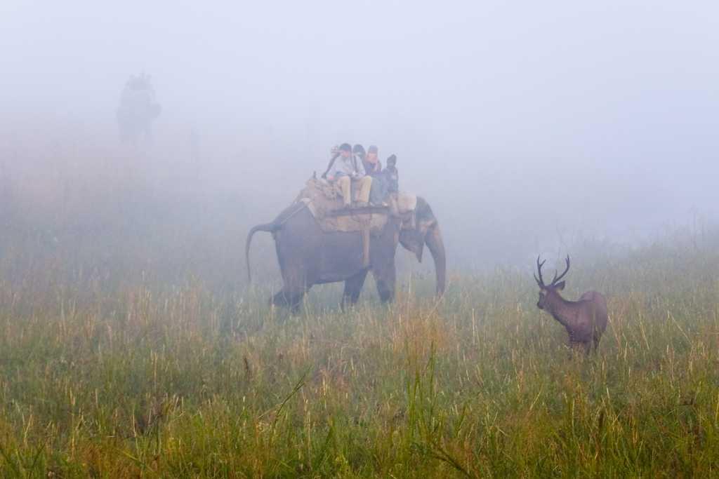 Sambar Deer in Jim Corbett National Park