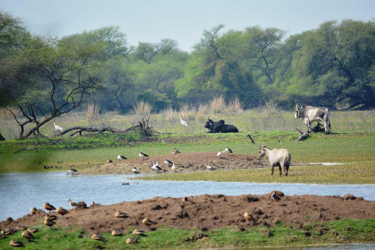Summer Season, Bharat Bird Sanctuary