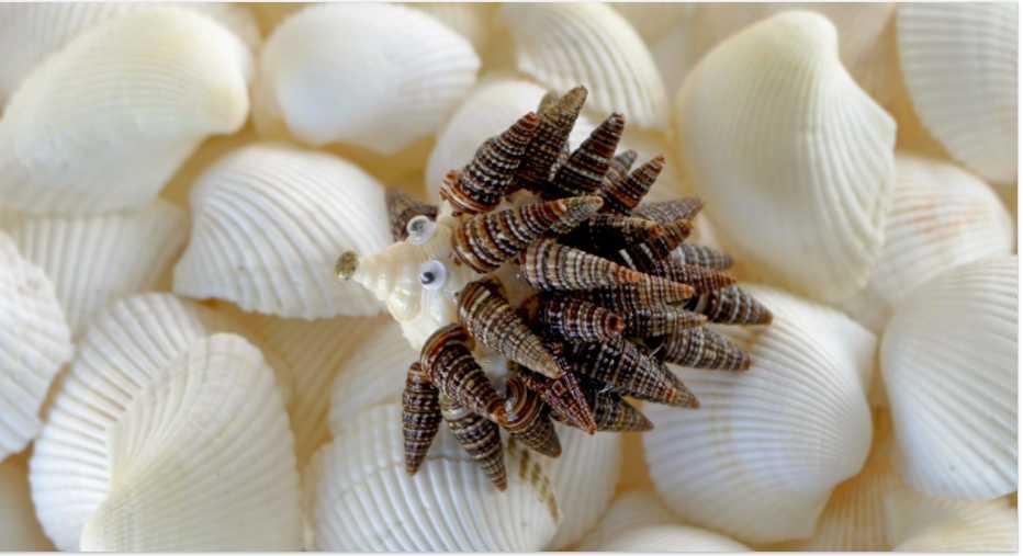 Shell, Handicrafts of India