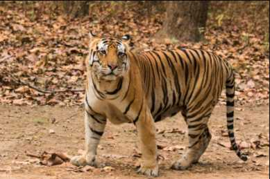 Tiger Reserves in India, Dudhwa Tiger Reserve