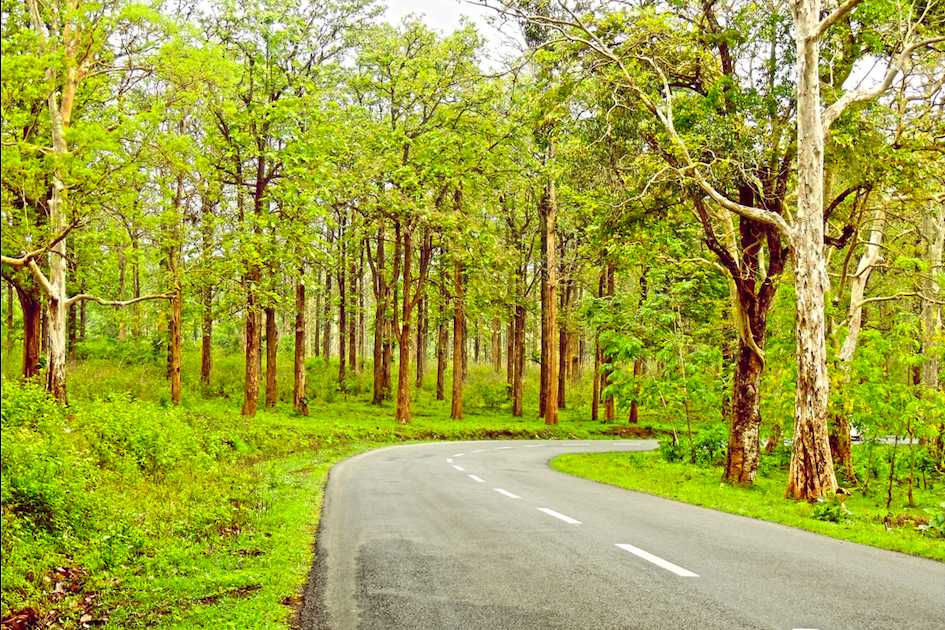 Forest Road, Bangalore to Wayanad
