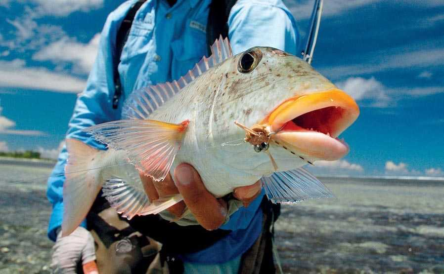 Desroches Fly Fishing, Fly Fishing in Seychelles