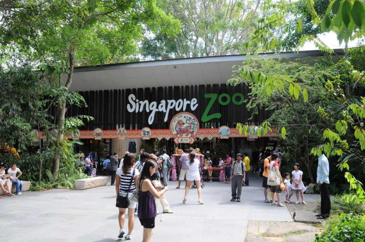 Singapore Zoo, Zoo