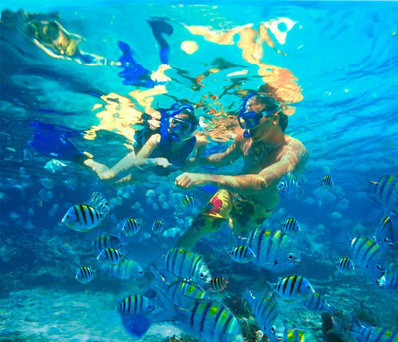 Snorkelling with fish in La Digue